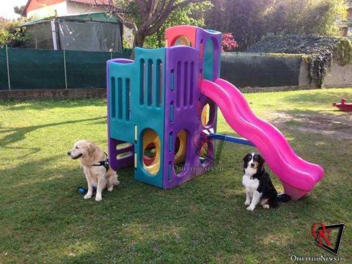 cirie dog crossing