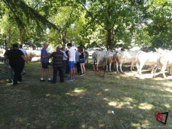 Rivarolo San Giacomo 2019 Fiera Agricola 6