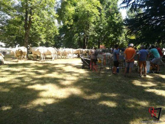 Rivarolo San Giacomo 2019 Fiera Agricola 7