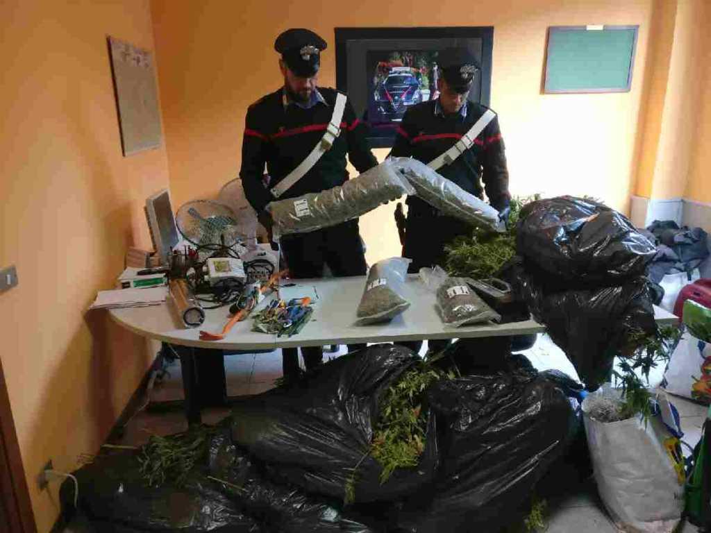 Gassino coltivazione marijuana