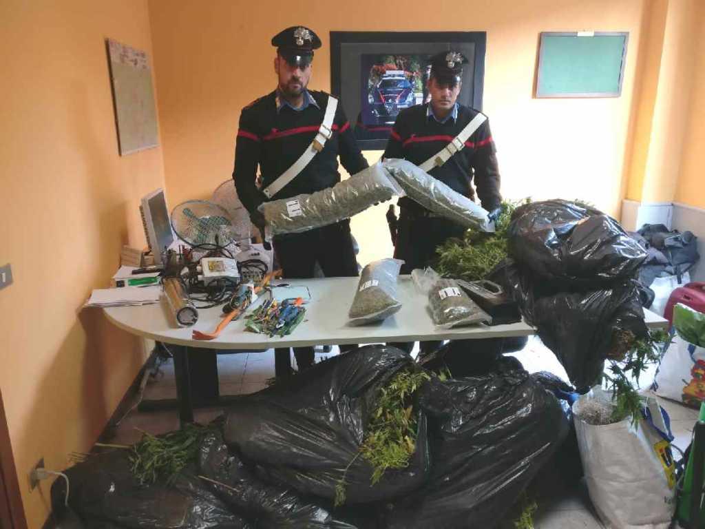 Gassino coltivazione marijuana 2