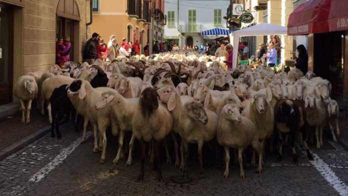 cropped transumanza pecore Res