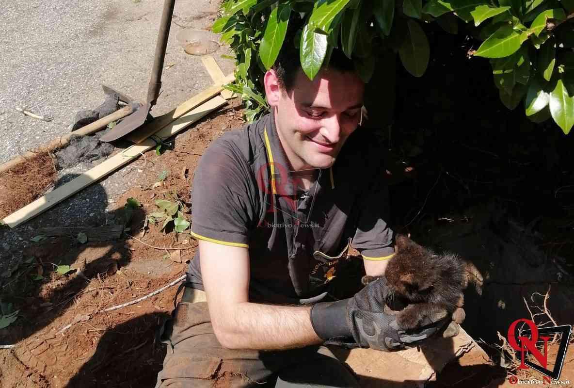 Ivrea salvataggio gatto 5