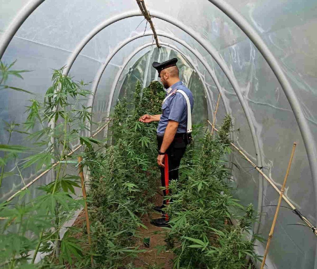 balangero piantagione