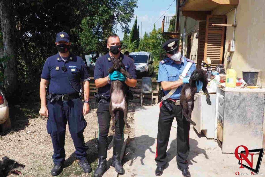 chieri salvati cagnolini 3 Res