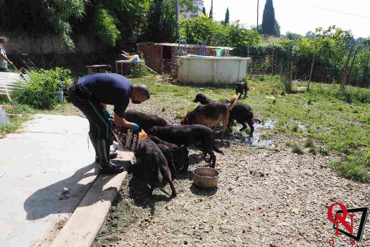 chieri salvati cagnolini 5 Res