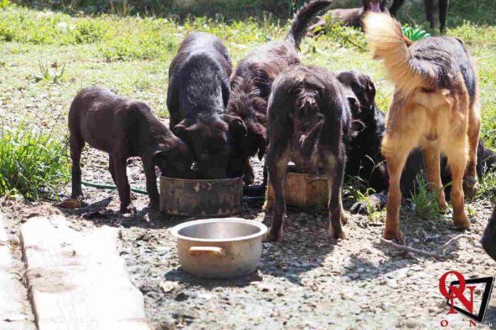 chieri salvati cagnolini 9 Res