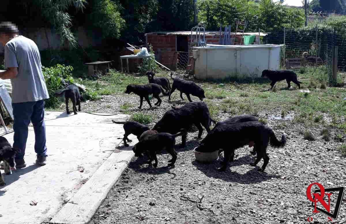 chieri salvati cagnolini Res