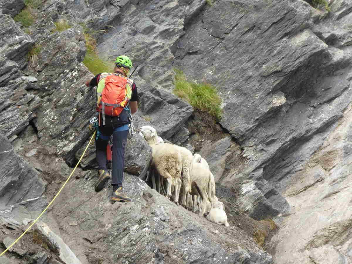 salza di pinerolo soccorso pecore 1