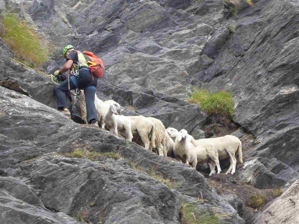 salza di pinerolo soccorso pecore 2
